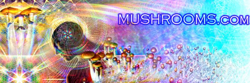 Mushroom Spores by The Hawks Eye Psilocybin Mushroom Spores